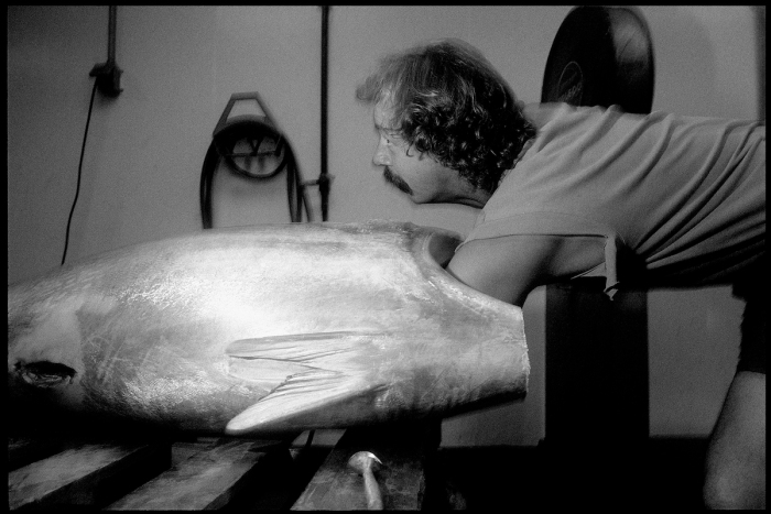Icing-Tuna-Cape-Ann-Tuna-1998