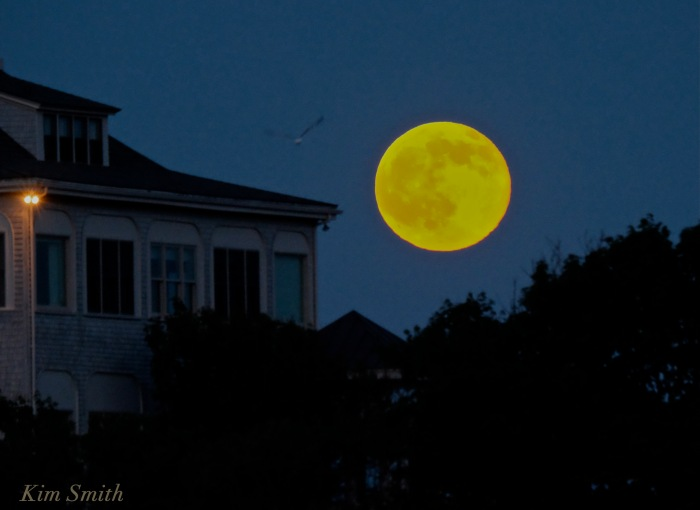 Strawberry Full Moon Summer Solstice Good Harbor Beach copyright Kim Smith