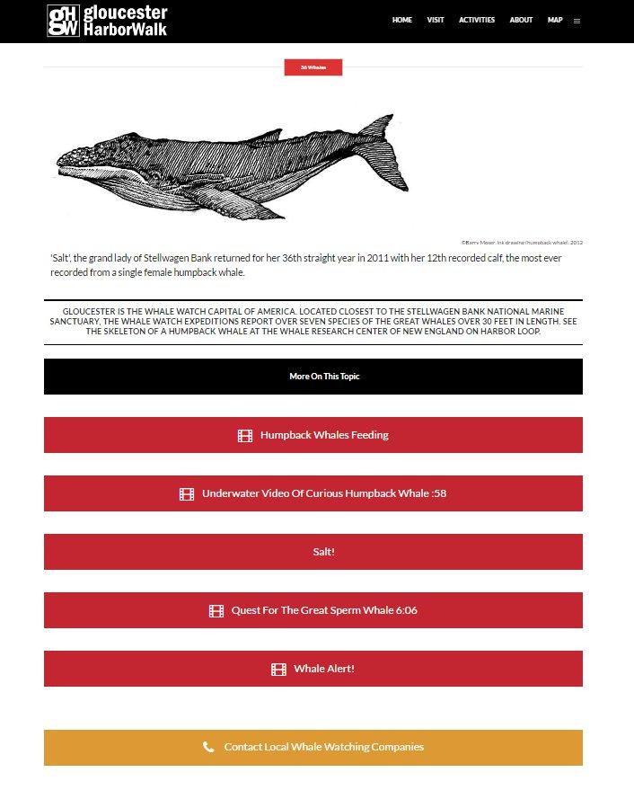 whale watch companies