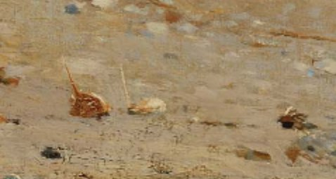 zoomed into horseshoe crabs (detail )