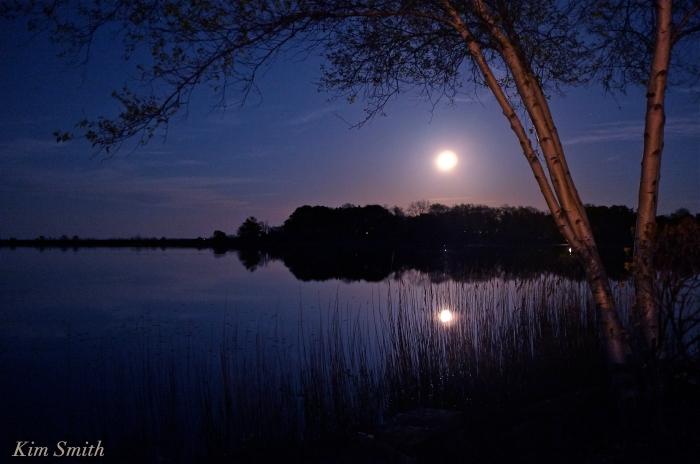 Birch tree Niles Pond moonlight copyright Kim Smith