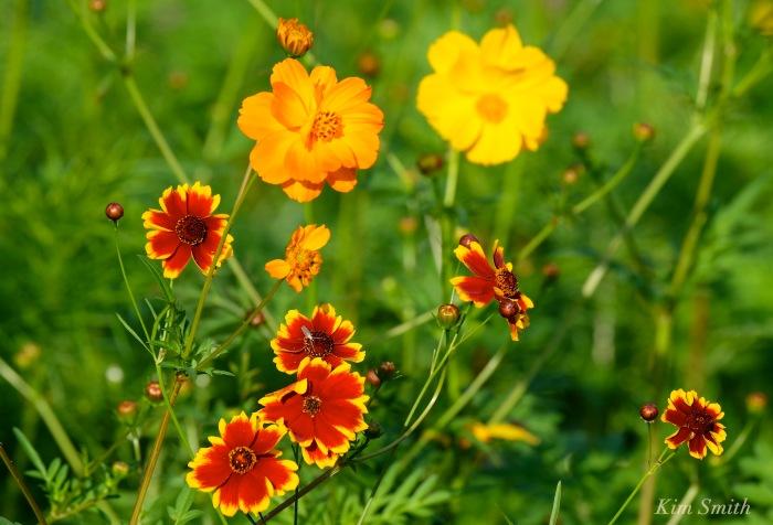 Wildflower patch copyright Kim Smith