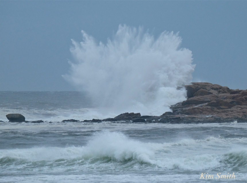 Brace Rock Brace Cove Hermine copyright Kim Smith