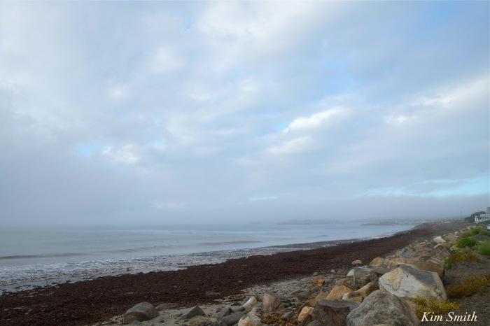 pebble-beach-seaweed-foogy-morning-copyright-kim-smith