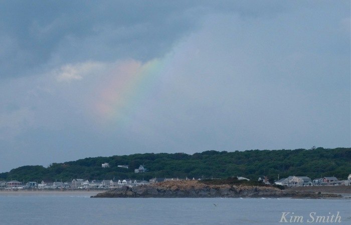 rainbow-cape-hedge-long-beach-cape-ann-copyright-kim-smith