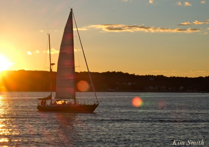 trails-and-sails-sailboat-dove-copyright-kim-smith