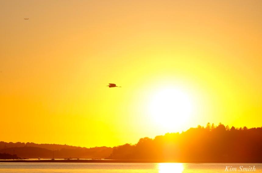 great-blue-heron-sunset-2-copyright-kim-smith