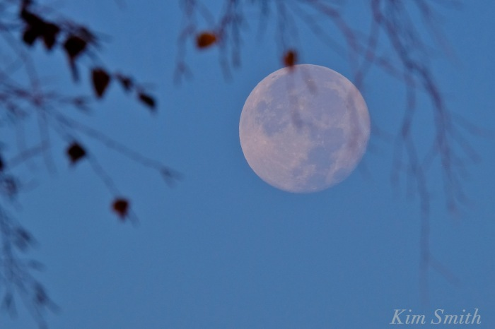 october-hunter-moon-copyright-kim-smith