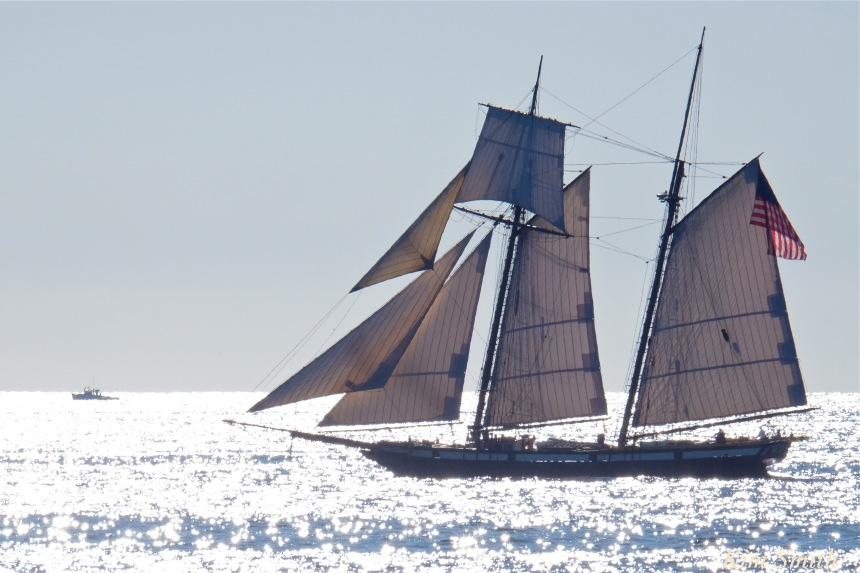 schooner-lynx-gloucester-backshore-copyright-kim-smith
