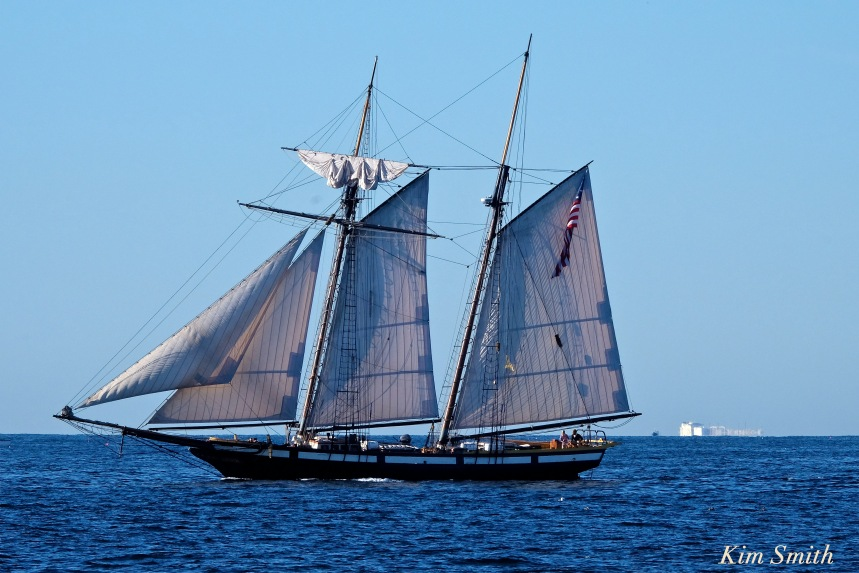 schooner-lynx-gloucester-boston-skyline-2-copyright-kim-smith