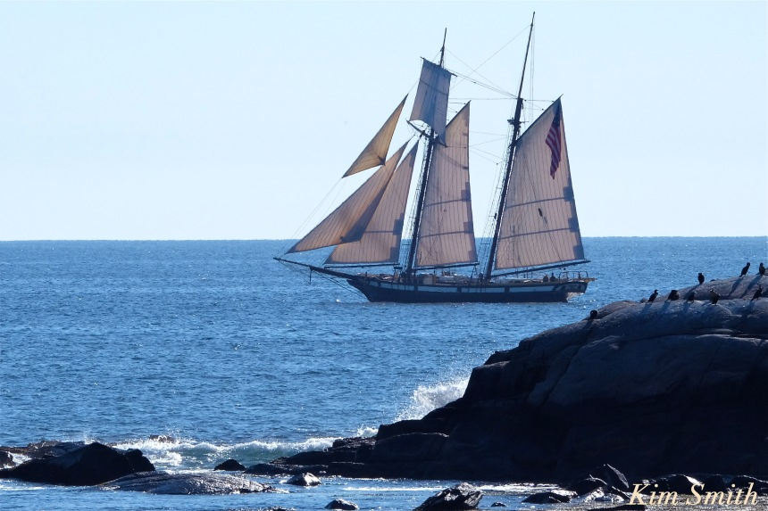 schooner-lynx-gloucester-brace-cove-copyright-kim-smith
