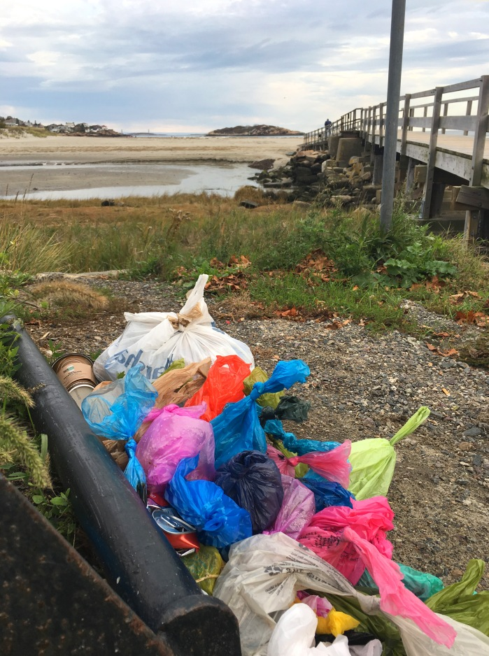bags-of-poop-left-at-beach-2-copyright-kim-smith