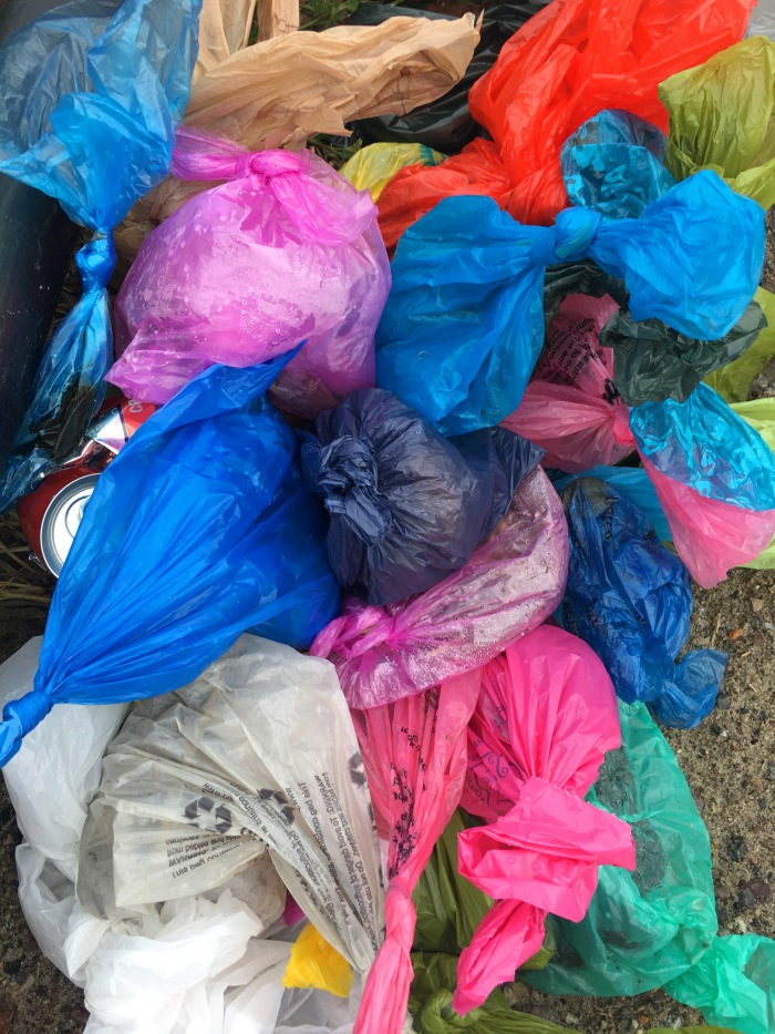 bags-of-poop-left-at-beach-copyright-kim-smith