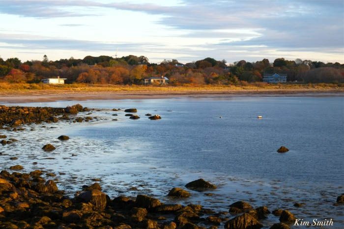 harbor-seals-brace-cove-gloucester-ma-2-copyright-kim-smith