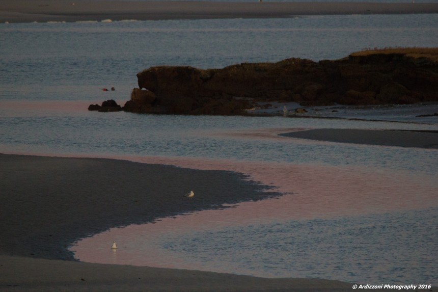 november-12-2016-pink-sand-and-ocean