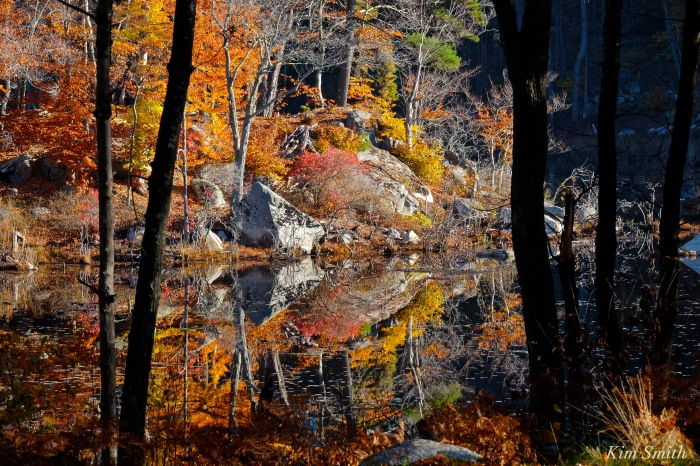 reflections-beaver-pond-copyright-kim-smith