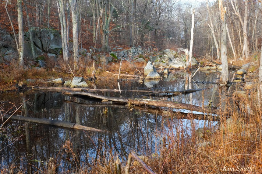 beaver-pond-langsford-pond-gloucester-ma-copyright-kim-smith