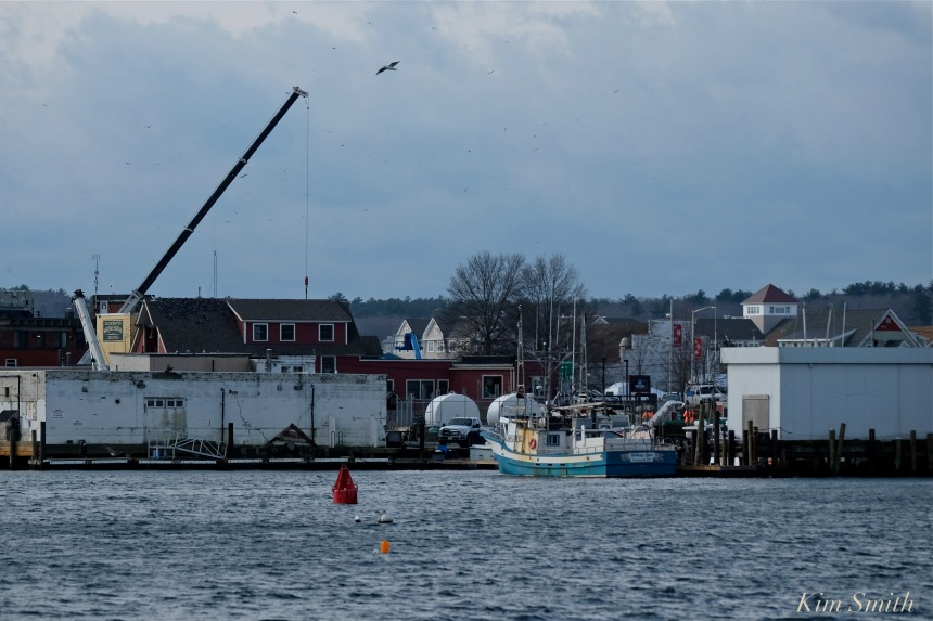 gloucester-harbor-copyright-kim-smith