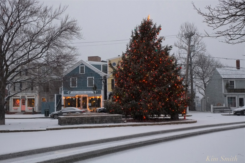 rockport-christmas-tree-molly-johnson-copyright-kim-smith