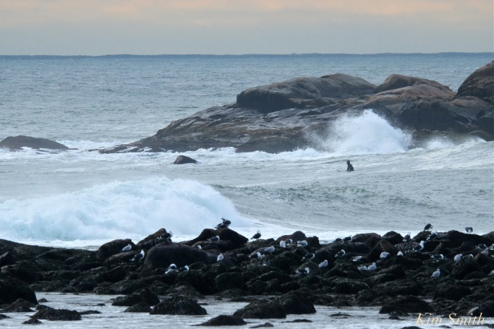 surfers-brace-cove-back-shore-gloucester-waves-copyright-kim-smith