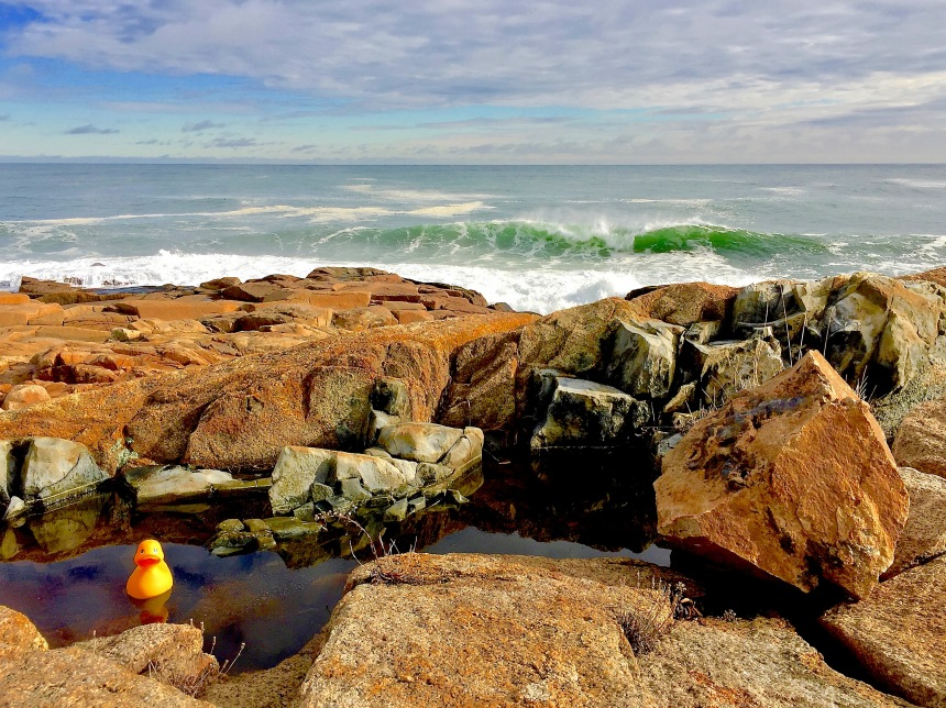 Rubber Duck plays it safe and swims in the Dolerite Dike fault.