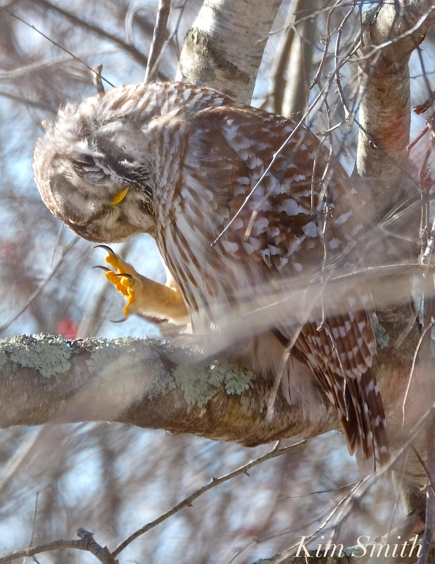 BARRED OWL TALONS | GoodMorningGloucester