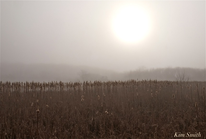 cattail-marsh-foggy-morning-copyright-kim-smith