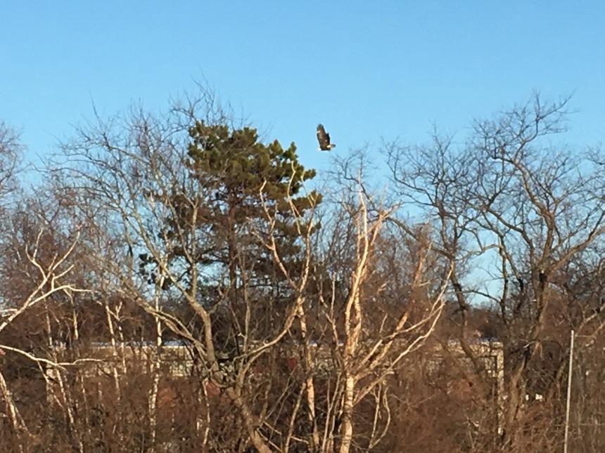 eagle-gloucester