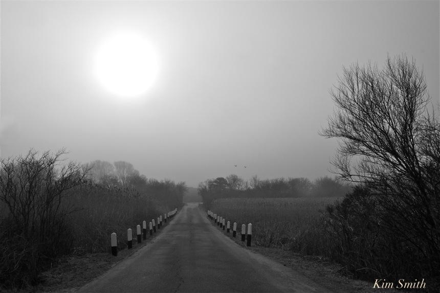 foggy-marsh-road-copyright-kim-smith