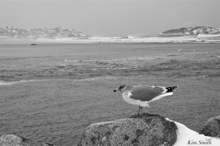 good-harbor-beach-gloucester-february-2017-snowstorm-copyright-kim-smith