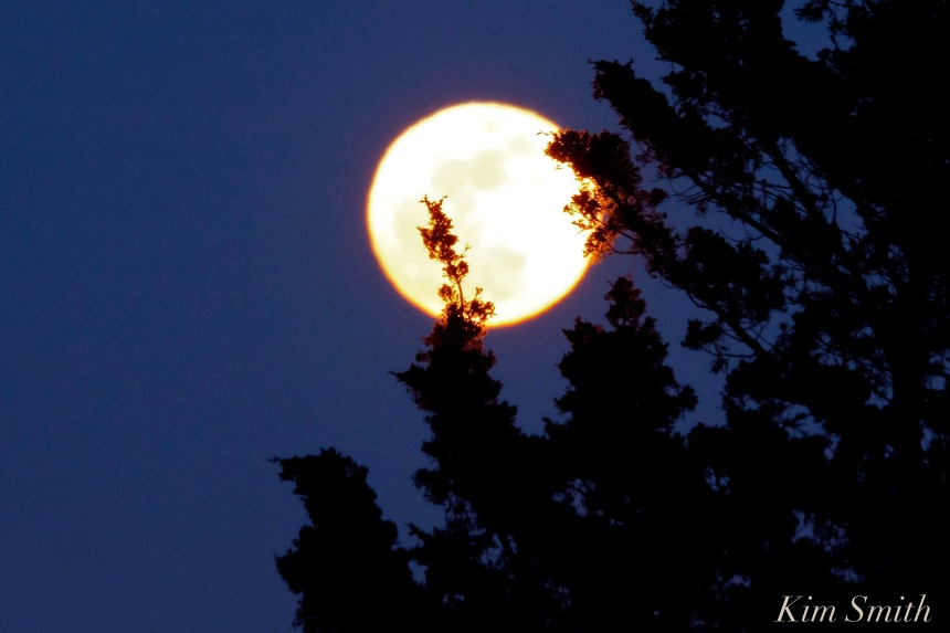 snow-moon-over-rockport-trees-2-copyright-km-smith