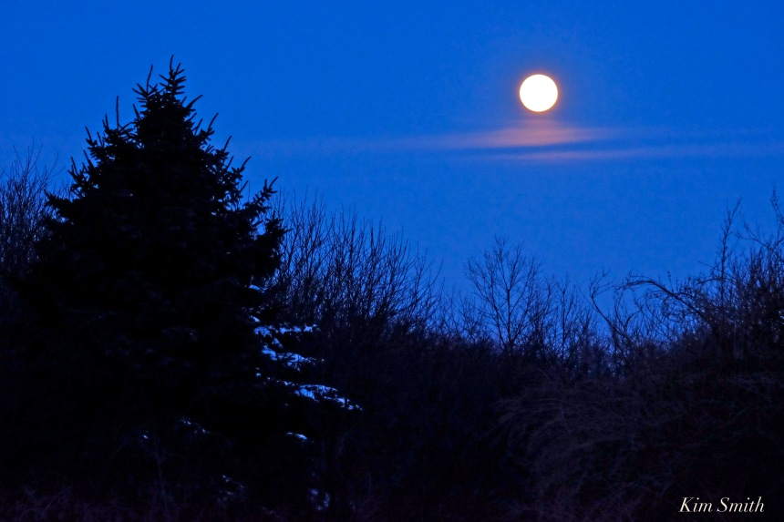 snow-moon-over-rockport-trees-copyright-km-smith-copy