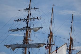 170622 Sail Boston fleet leaving Cape Ann for Halifax (7a)