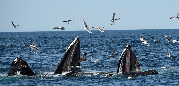whale luncheon web (3)