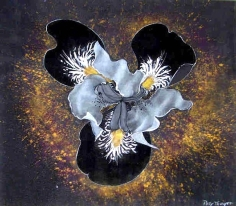 Centered (aka Iris), 11 ¾ x 13 ½ inches. Mixed media on paper