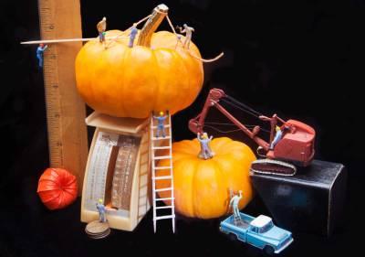 Giant-Pumpkin-Contest