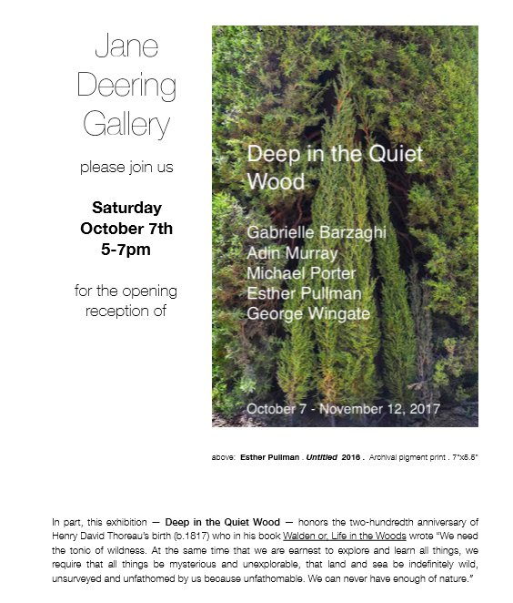 jane deering gallery deep in quiet wood