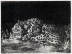 George Stubbs A Sleeping Cheetah mezzotint 1788 2nd state of 2 UNSOLD est 20 to 30,000
