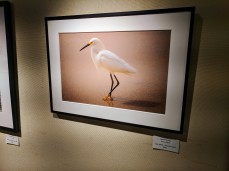 Janice Koskey Proud Egret color photo Rockport Art Association group exhibition