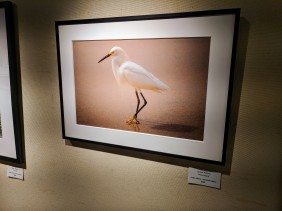 Janice Koskey Proud Egret color photo Rockport Art Association group exhibition