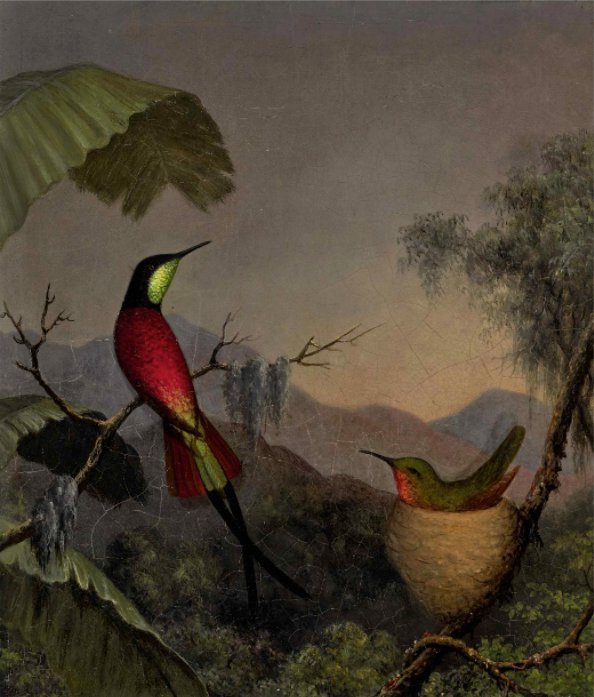 Martin Johnson Heade Crimson Topaz Hummingbirds Nesting near a Palm tree o c 13 x 11 ca1865 est 150 to 200 thousand Sothebys