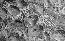 IceCrystals1-15-17_8774
