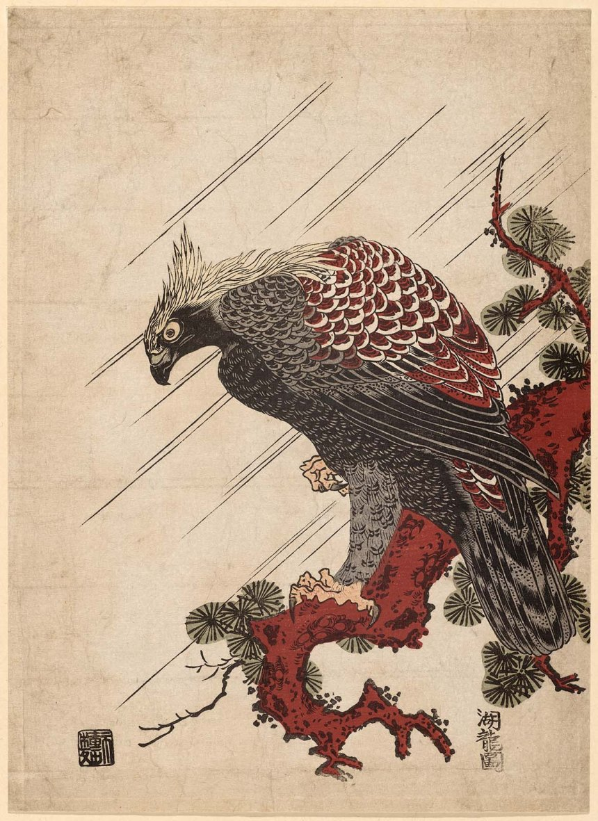 eagle on a pine branch in the rain MFA Japanese Edo period ca1770s Isoda koryusai.jpg