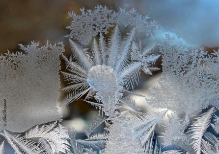 IceCrystalFlower_0154
