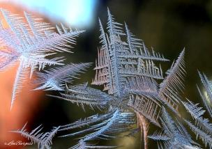 IceCrystals(b)1-6-18_0294