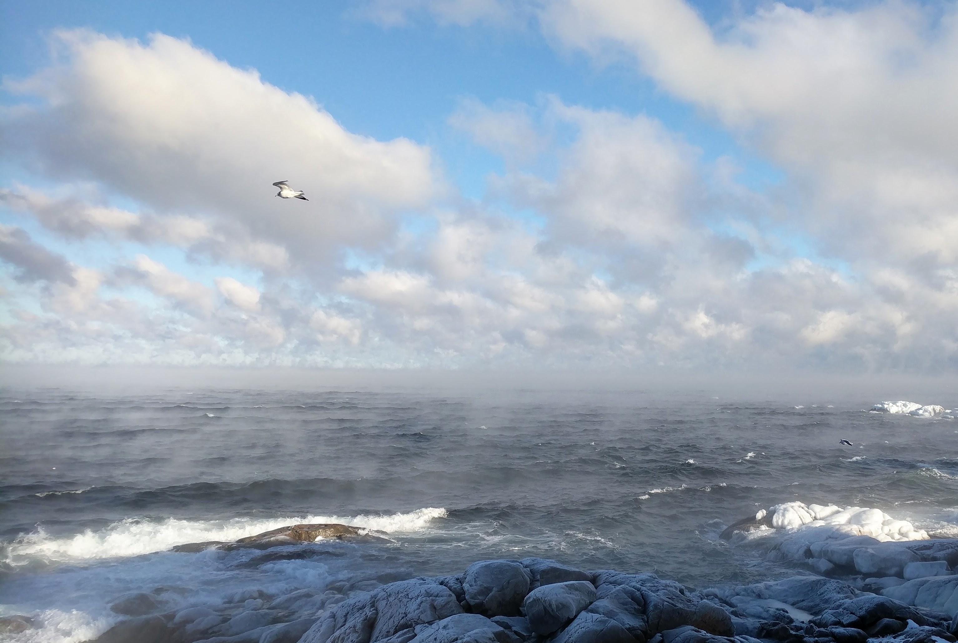 soaring January 1 2018 ©C ryan (2)