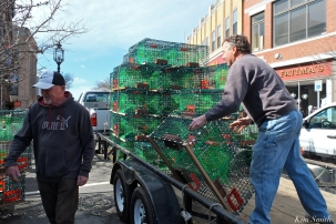 Lobster trap Tree Coming Down Gloucester MA copyright Kim Smith JPG