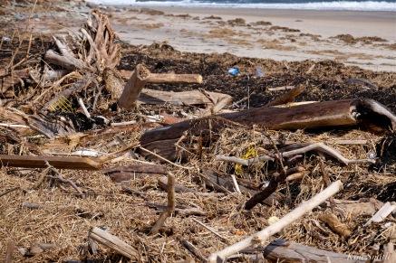 Sandy Point Reservation winter storm damage Massachusetts barrier beach copyright Kim Smith