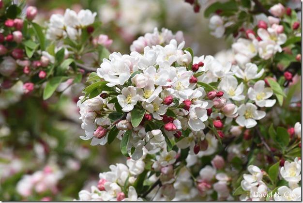 2018 5 19 Very Misc Walks-Spring Florals 013