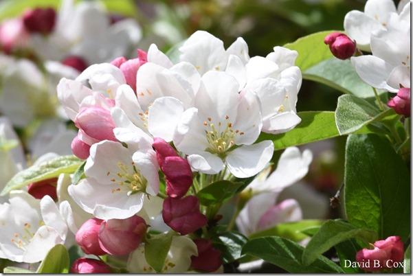 2018 5 19 Very Misc Walks-Spring Florals 062